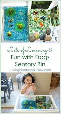 This frog sensory bin has lots of Montessori-inspired learning and fun with frogs, including frog life cycle, rainforest concepts, and fine-motor work; post includes free frog unit study