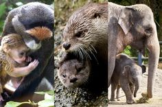 Who should be Mother of the Year at the Oregon Zoo?