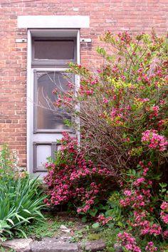 Metamora ,Indiana: love the door with flowering vines