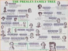 PRETTY FAMILY TREES - Yahoo Image Search Results