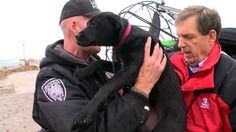 NBC affiliate helps rescue dog stranded on Lake Erie ice