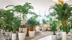 LOBBY - The lobby evokes the glamour of 1950s Miami Beach with original gold and marble columns.