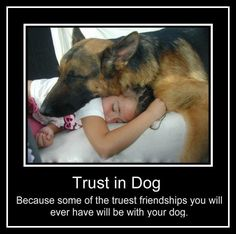 Wicked Training Your German Shepherd Dog Ideas. Mind Blowing Training Your German Shepherd Dog Ideas. Baby Dogs, Dogs And Puppies, Doggies, Baby Yorkie, Funny Animals, Cute Animals, Animals And Pets, I Love Dogs, Cute Dogs