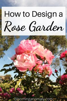 Learn how to design a rose garden, no matter how large or small your outdoor space is. Choose from floribunda roses, climbing roses, miniature roses, and more. Click on the pin for more ideas for a rose garden. #roses #rosegarden #tearoses #floribundaroses Beautiful Flowers Garden, Amazing Flowers, Beautiful Roses, Rose Bush Care, Rose Care, Container Gardening, Urban Gardening, Flower Gardening, Gardening Tips