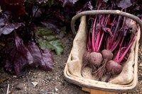 Easy-care veg crops to grow - Features: Fruit & veg - gardenersworld.com