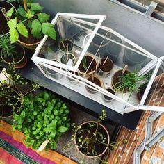Terrarium, Avocado, House Plans, Planters, Interior, Urban Gardening, Outdoor, Inspiration, Green Decoration