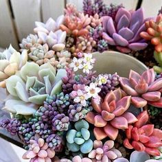 My love for succulents is true. I want to recreate this (like right now at but I can barely keep one fiddle leaf fig alive. Maybe my typical style of plant care, or lack thereof, would work on these like some sort of benign neglect. Succulent Arrangements, Cacti And Succulents, Planting Succulents, Planting Flowers, Pink Succulent, Cactus Plants, Air Plants, Indoor Plants, Indoor Outdoor