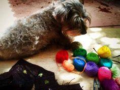 Hanak inspeccionando los colores de esta temporada. Ropa para perro, textiles y bordados tradicionales mayas Handmade mayan dog clothes. embroidery, traditional mayan textiles. San Cristobal de las Casas, Chiapas, Mexico