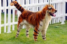 5 Pets With Extremely Strange Markings
