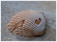 Hearts in Nature Photography