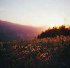 """floweralia: """" Flower-love. Blog """""""