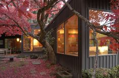 A majestic Japanese maple nestles against the Master Bedroom and adds vibrant color to the courtyard.