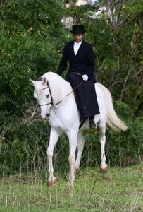 American Sidesaddle Association Photo Gallery