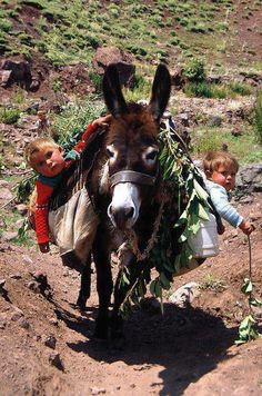 I need a pack donkey for Bebe and hound. They would both hang out of the pack like this too! I'm going to die laughing thinking about this.