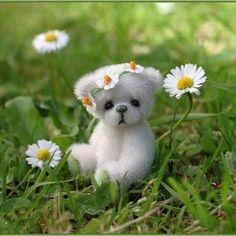 ❀◕ ‿ ◕❀.daisies and bear