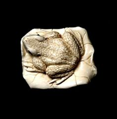 Ivory carved netsuke of a frog on a lily, signed to base. Length 4 cm