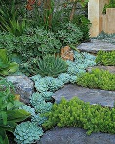 Garden Landscaping Ideas for Front and Backyard Landscaping with Succulents. -Garden Landscaping Ideas- Landscaping Ideas for Front and Backyard Landscaping with Succulents. -Garden Landscaping Ideas-Landscaping with Succulents. Dream Garden, Garden Art, Dog Garden, Herb Garden, Succulents Garden, Planting Flowers, Succulent Plants, Succulent Rock Garden, Succulent Outdoor