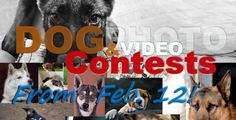 Hurry up to join ForDogTrainers.com Photo & Video Contests