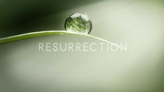 Resurrection is a new series on ABC.  Intriguing - here's my review and interview with Executive producers.