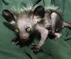 so ugly, yet so cute!