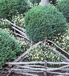 Create the Country Look...Infuse rustic charm into a formal knot garden by outlining sections of the planting beds with a wattle fence. Supple branches, such as those of willow, work best for weaving through the upright branch posts.