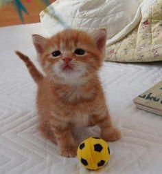 Cute football player