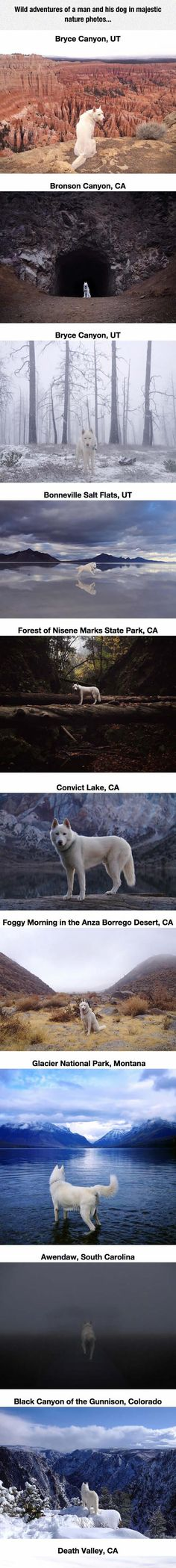Dogs Are The Best Travel Buddies...click for rest, they are really cool