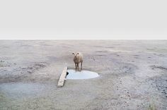 Out of the herd, Petros Koublis