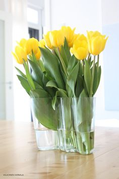 Yellow tulips in Iittala Aalto-vase Yellow Tulips, Tulips Flowers, Spring Flowers, Beautiful Flowers, Beautiful Things, Flower Power, Mellow Yellow, Color Yellow, Spring Home