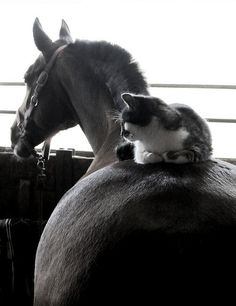 source: horsesornothing Best friends- Horse and Cat by in666moments on Flickr. horseheaven / via herthen.tumblr