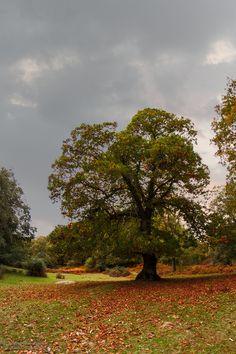 El castañazo by afotonica fotografía on 500px