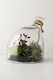 Terrariums never seem quite of this world