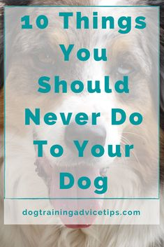 10 Things You Should Never Do To Your Dog. #dogtrainingadvicetips #dogcare #doghealth #dogtips #dogs Foods Dogs Can Eat, Easy Knit Baby Blanket, Dog Facts, Homemade Dog Treats, Dog Care, Dog Training, Fur Babies, Your Dog, Pets