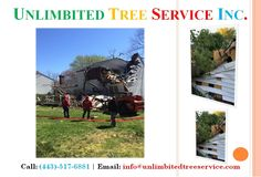 Baltimore Storm Damage Services & Emergency Tree Service & Tree Care