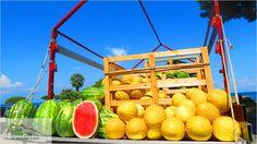 Melons in Ischia!