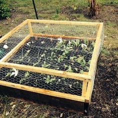 Plant Protection From Animals On Pinterest Raised Beds Chicken Wire And Veggie Gardens