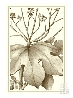 Cropped Sepia Botanical VI Art Print by Vision Studio at Art.com
