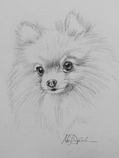 Graphite Print Western Pomeranian from MarieDuplechien on Etsy - Kalligrafie lernen - Dogs Art Drawings Sketches Simple, Pencil Art Drawings, Easy Drawings, Drawing Ideas, Dog Drawings, Drawing Tips, Cute Animal Drawings, Cute Animals To Draw, Animal Sketches Easy