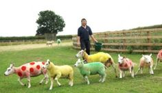 Farmer In Yorkshire 'Dresses' His Sheep In Tour de France 'Jerseys'
