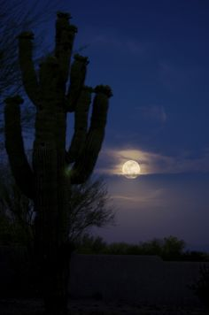 Desert Moon by Tim Schneider, via 500px; Saguaro National Park, Arizona