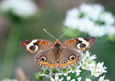 Butterfly, Samantha Henneke, Seagrove, NC
