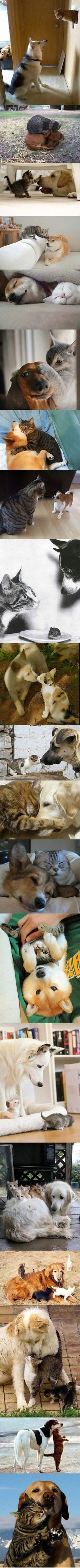 Who says cats and dogs can`t get along?