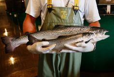 NYTimes Supports Labeling Genetically Modified Salmon -- Do you think consumers have the right to know what we're eating?