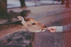 Добро, которое ты делаешь от сердца, ты делаешь всегда себе.  Лев Толстой