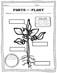 Plant Life Cycle and Parts of a Plant Unit for PreK