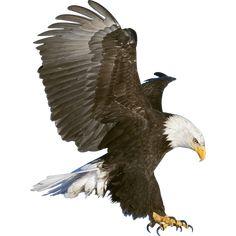 Eagle Claws