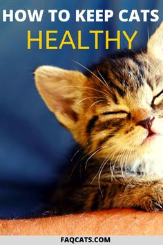 Discover how to care for and keep your cat healthy with these helpful tips. Learn about common cat health problems, issues and what warning signs to look for. We discuss cat foods, helpful remedies, cleanses, and more to keep your fur pal happy! Cat Care Tips, Dog Care, Pet Tips, All Cat Breeds, Cat Health Care, Kitten Care, Cat Facts, Animal Facts, Cute Cats And Kittens