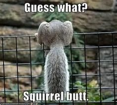 15 Ideas For Funny Animals Squirrel Friends Squirrel Memes, Cute Squirrel, Baby Squirrel, Squirrels, Funny Animal Pictures, Funny Photos, Funny Animals, Cute Animals, Funny Squirrel Pictures