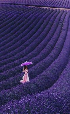 Lavender Garden, Lavender Blue, Lavender Fields, Lavender Flowers, Purple Flowers, Lavander, Purple Love, All Things Purple, Shades Of Purple