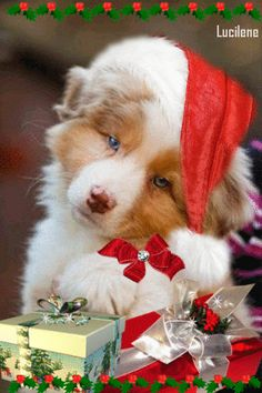 The perfect Dog Gifts Animated GIF for your conversation. Discover and Share the best GIFs on Tenor. Christmas Tree And Santa, Christmas Puppy, Christmas Scenes, Christmas Animals, Merry Christmas And Happy New Year, Christmas Cats, Christmas Pictures, Merry Xmas, Christmas Blessings